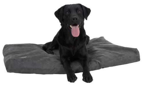 matrace z paměťové pěny pro psy